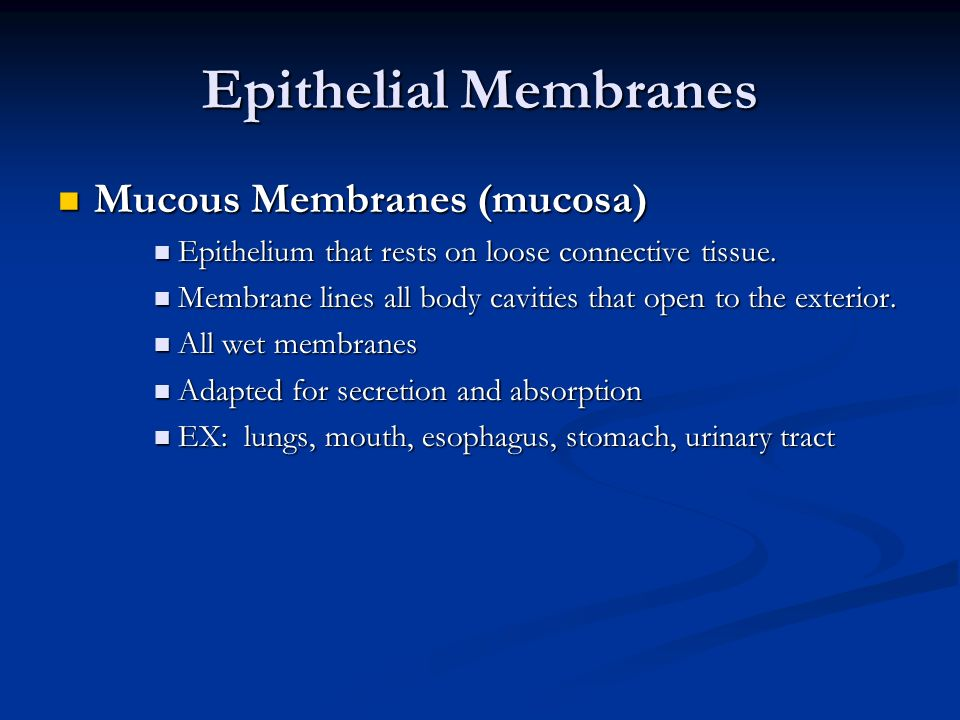 Epithelial Membranes Mucous Membranes (mucosa)