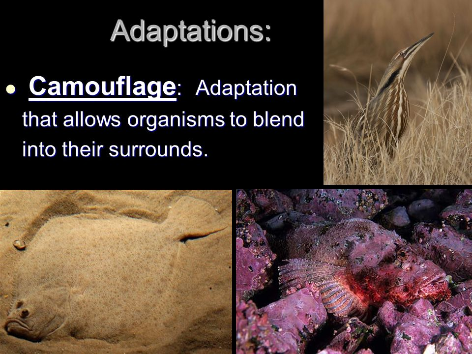 Adaptations: Camouflage: Adaptation that allows organisms to blend