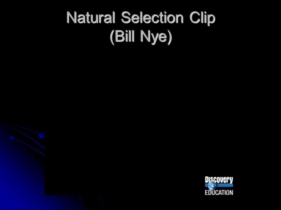 Natural Selection Clip (Bill Nye)