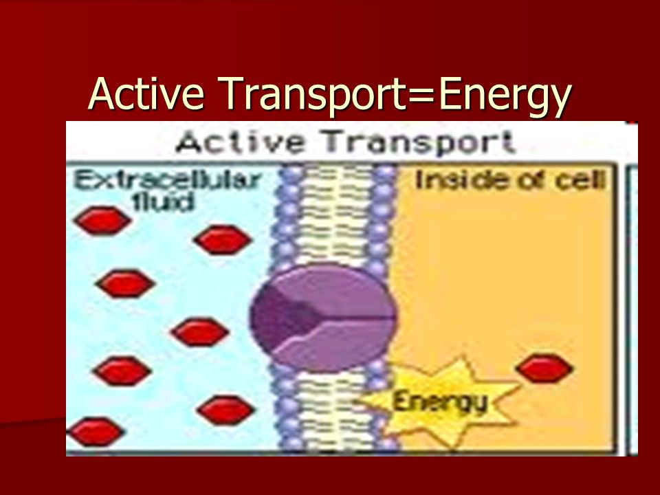 Active Transport=Energy