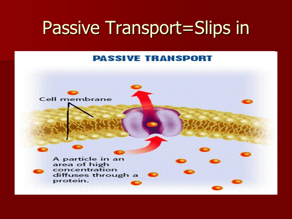 Passive Transport=Slips in