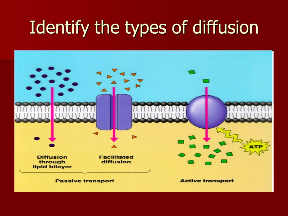 Identify the types of diffusion
