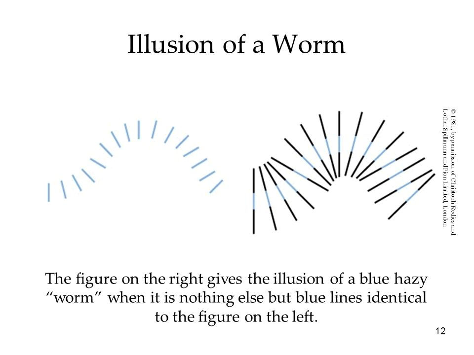 Illusion of a Worm© 1981, by permission of Christoph Redies and. Lothar Spillmann and Pion Limited, London.