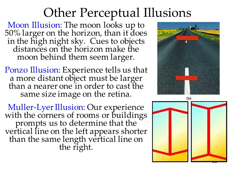 Other Perceptual Illusions