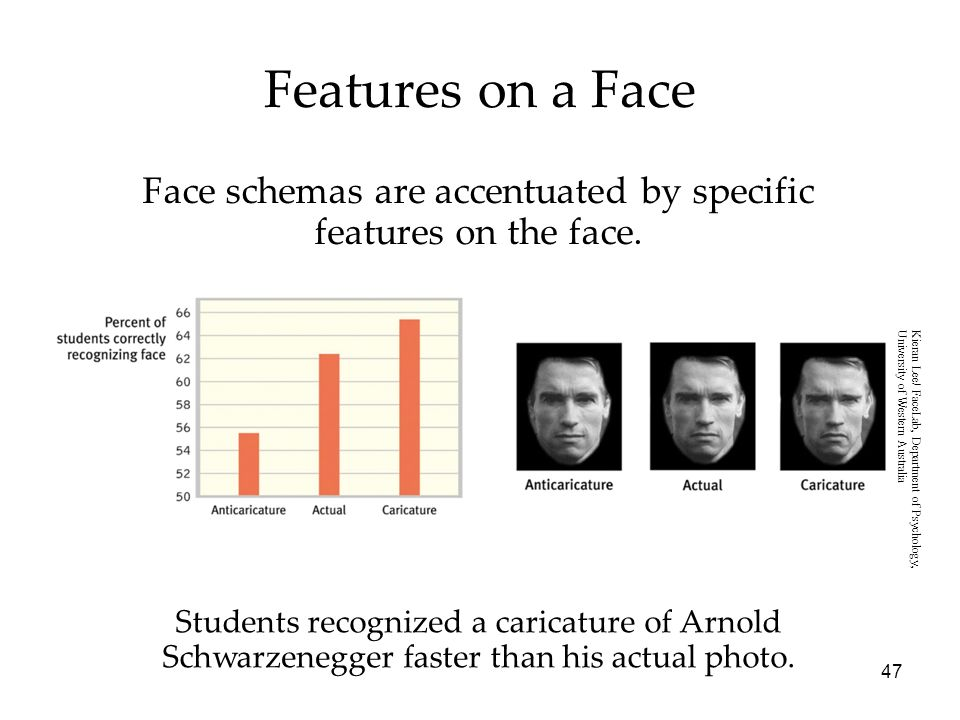 Face schemas are accentuated by specific features on the face.