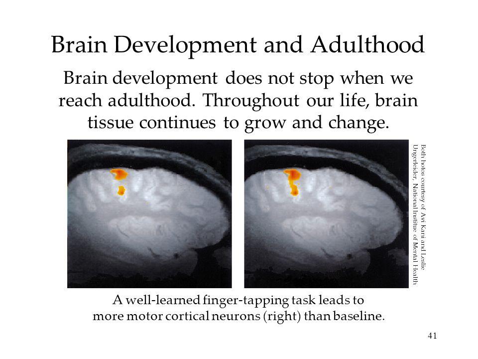 Brain Development and Adulthood