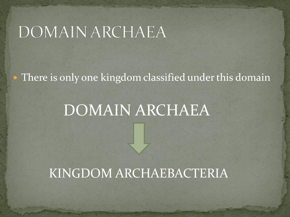 DOMAIN ARCHAEA DOMAIN ARCHAEA KINGDOM ARCHAEBACTERIA