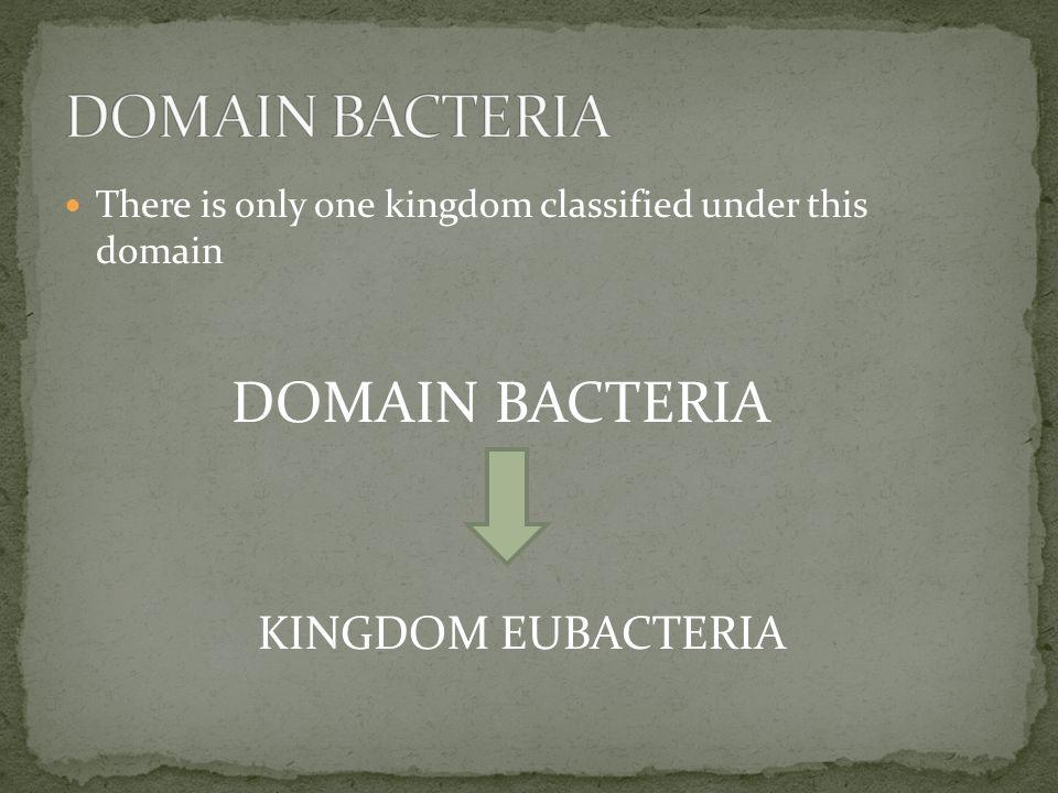 DOMAIN BACTERIA DOMAIN BACTERIA KINGDOM EUBACTERIA