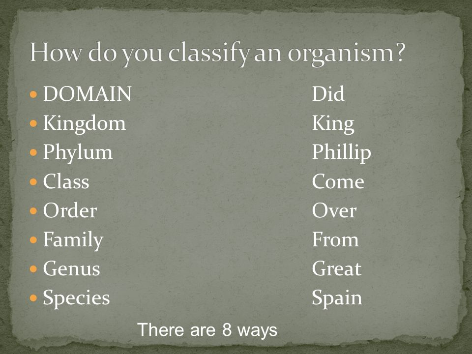 How do you classify an organism