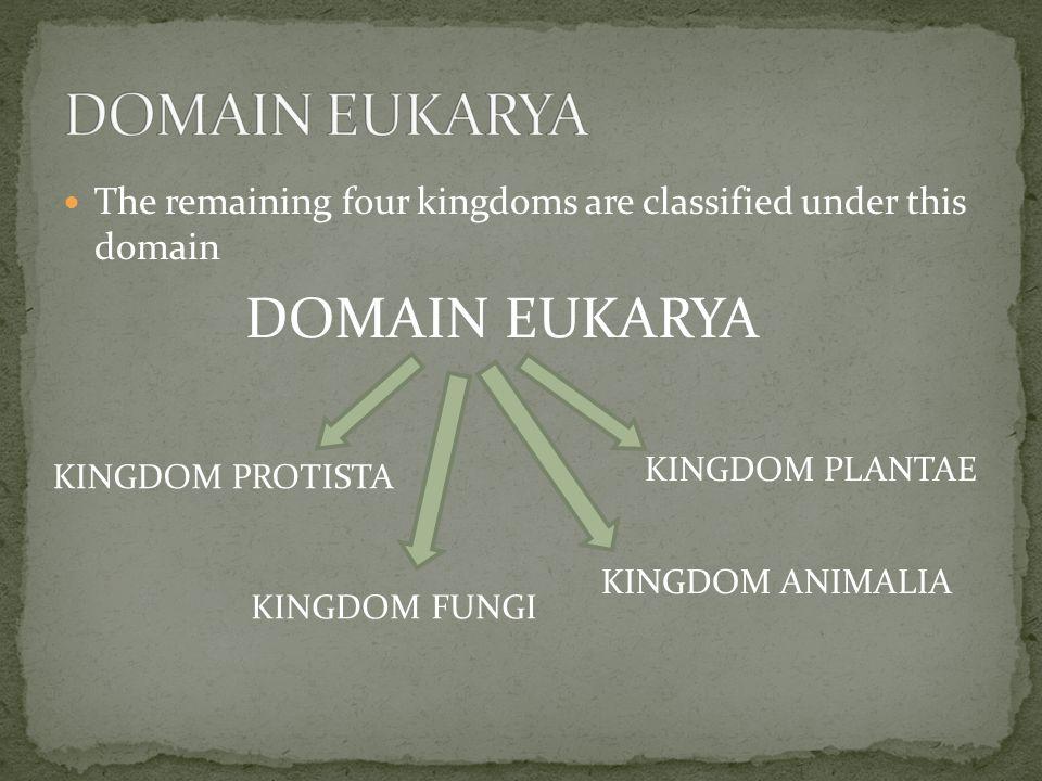 DOMAIN EUKARYA DOMAIN EUKARYA