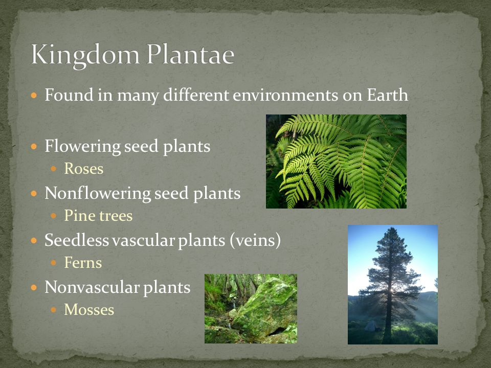 Kingdom Plantae Found in many different environments on Earth
