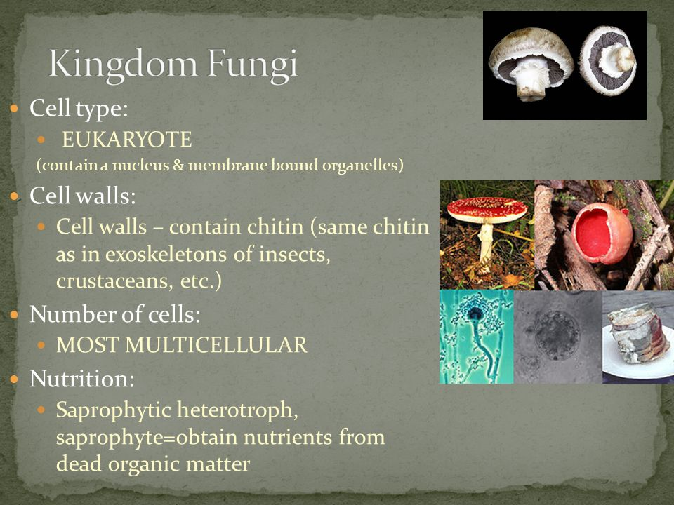 Kingdom Fungi Cell type: Cell walls: Number of cells: Nutrition: