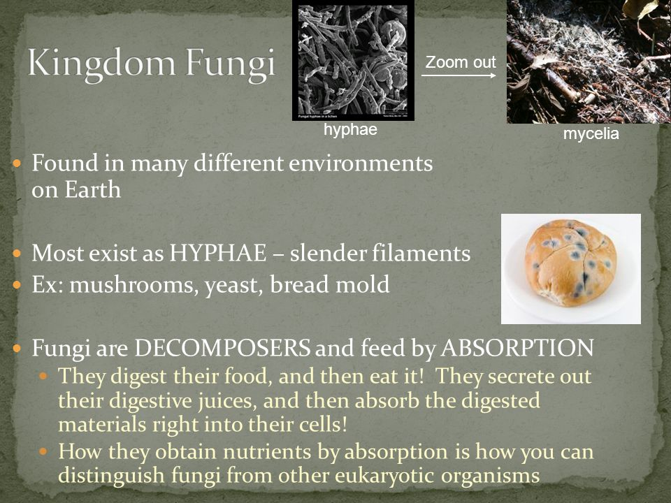 Kingdom Fungi Found in many different environments on Earth