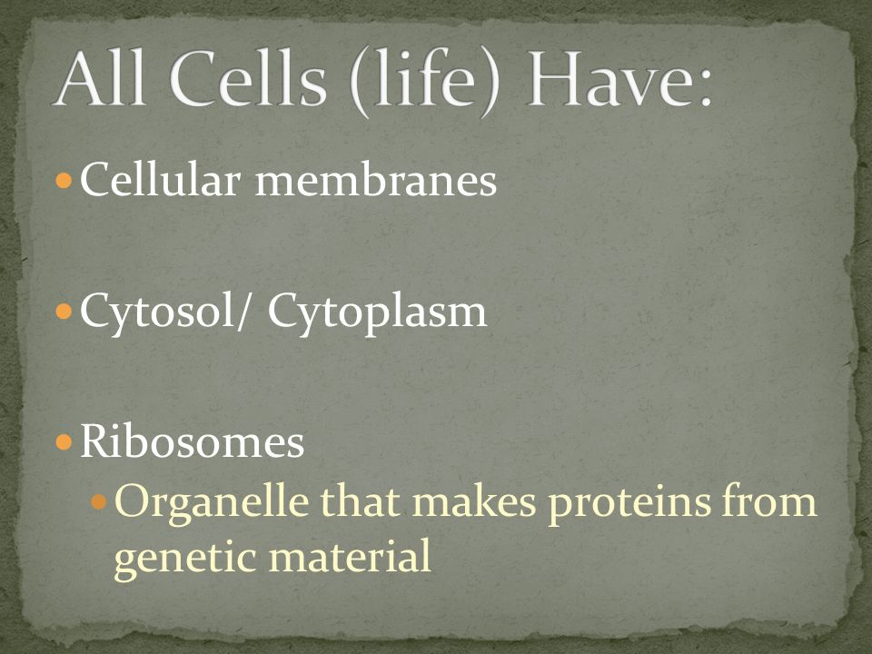 All Cells (life) Have: Cellular membranes Cytosol/ Cytoplasm Ribosomes