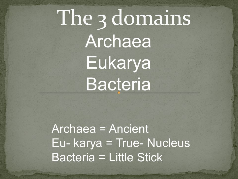 Archaea Eukarya Bacteria The 3 domains Archaea = Ancient