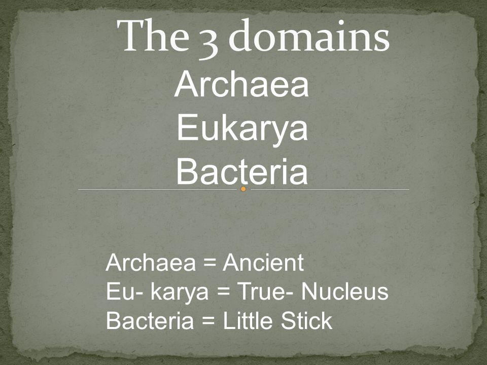 Archaea Eukarya Bacteria The 3 domains Archaea = Ancient