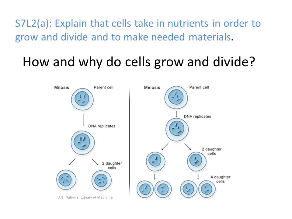 How and why do cells grow and divide