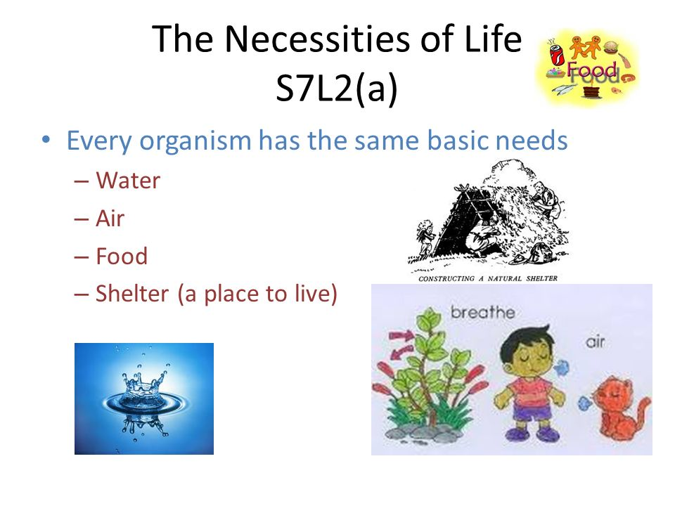 The Necessities of Life S7L2(a)