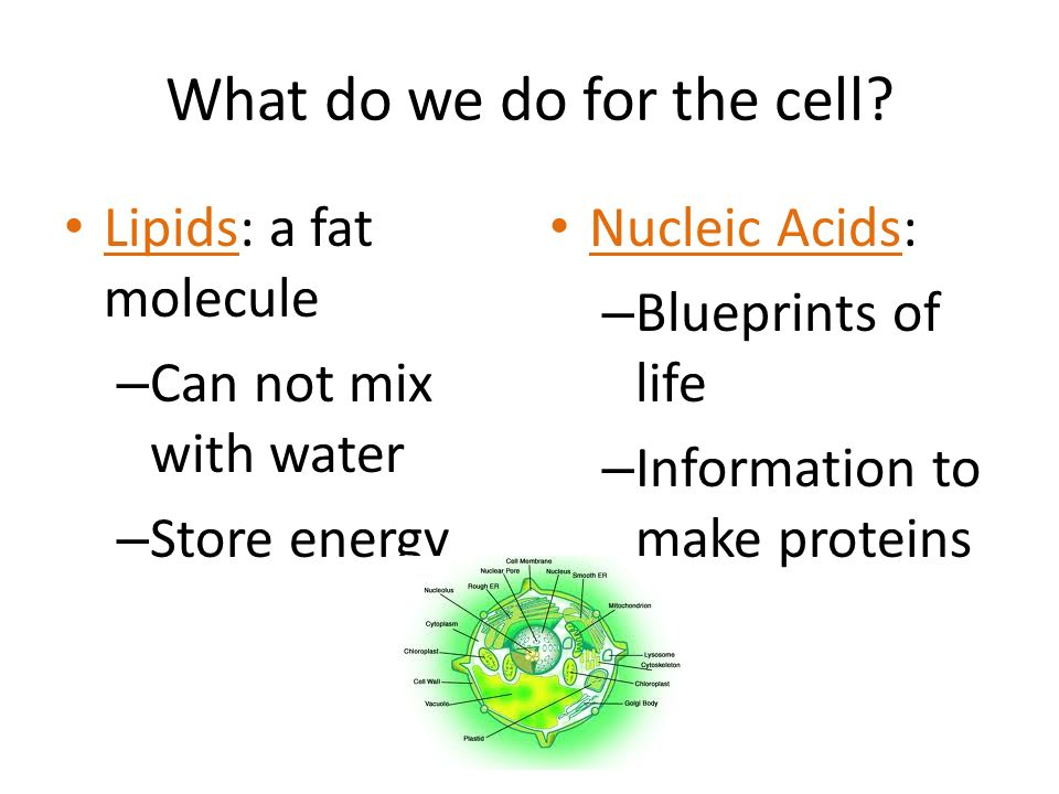 What do we do for the cell