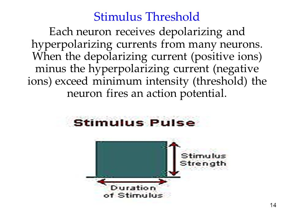 Stimulus Threshold