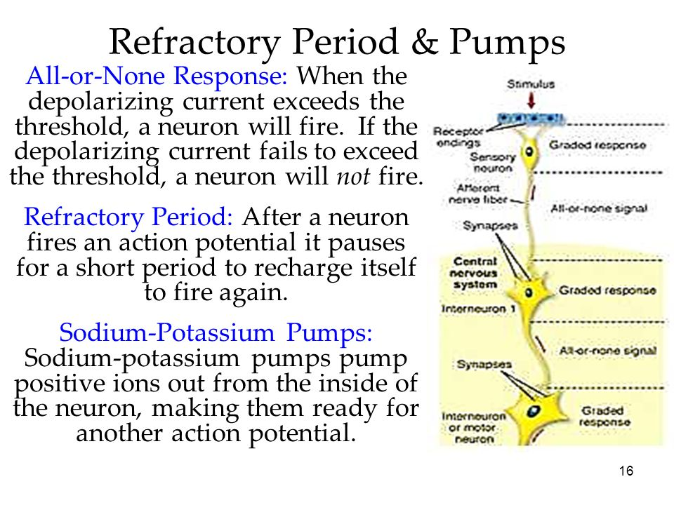 Refractory Period & Pumps