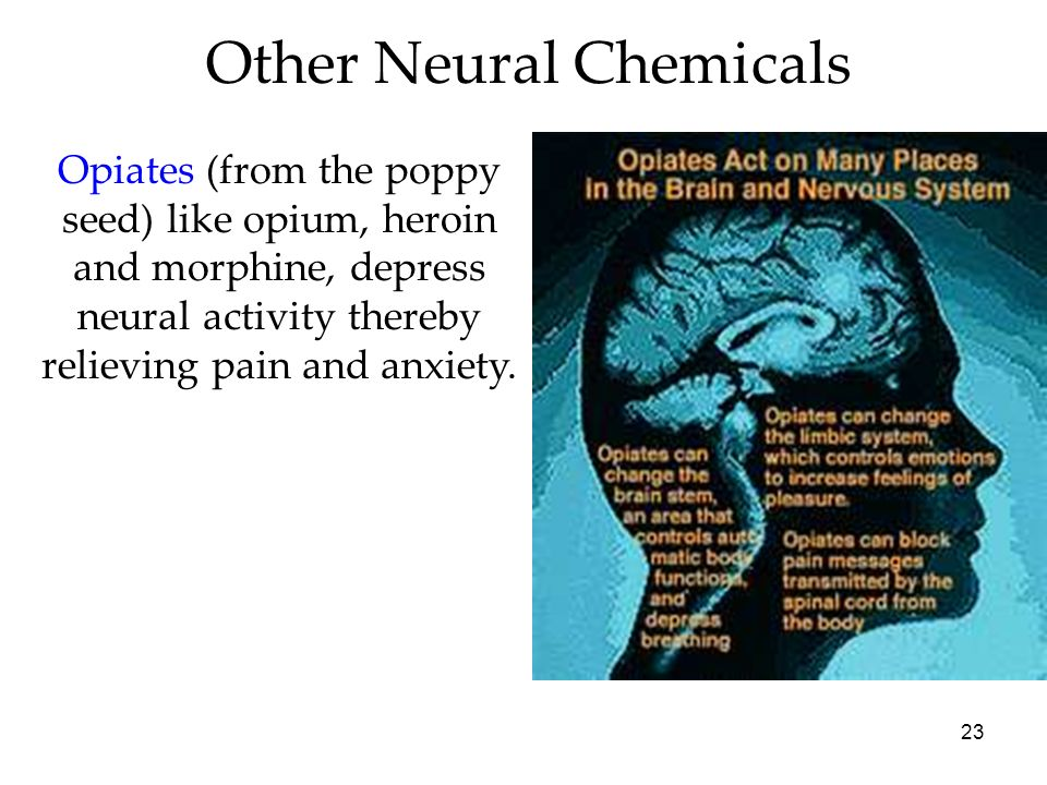 Other Neural Chemicals