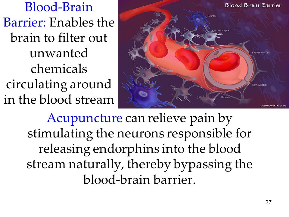 Blood-Brain Barrier: Enables the brain to filter out unwanted chemicals circulating around in the blood stream