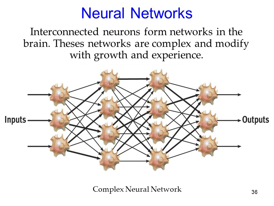 Neural Networks Interconnected neurons form networks in the brain. Theses networks are complex and modify with growth and experience.