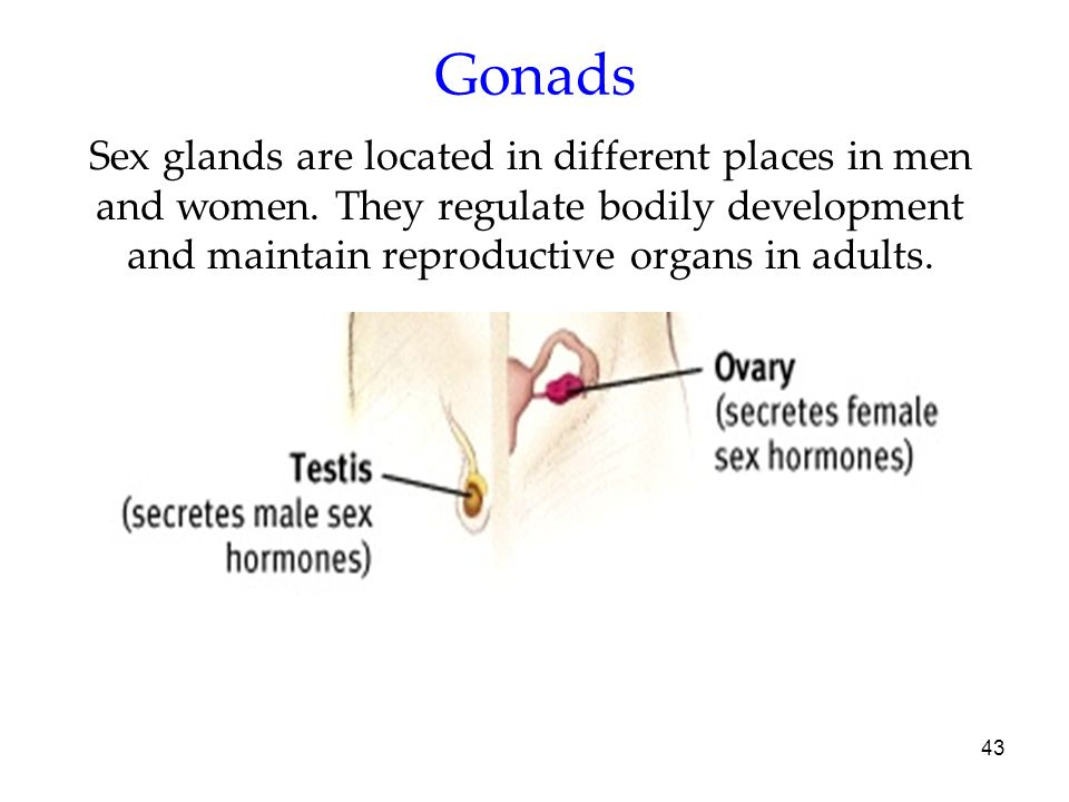 Gonads Sex glands are located in different places in men and women.
