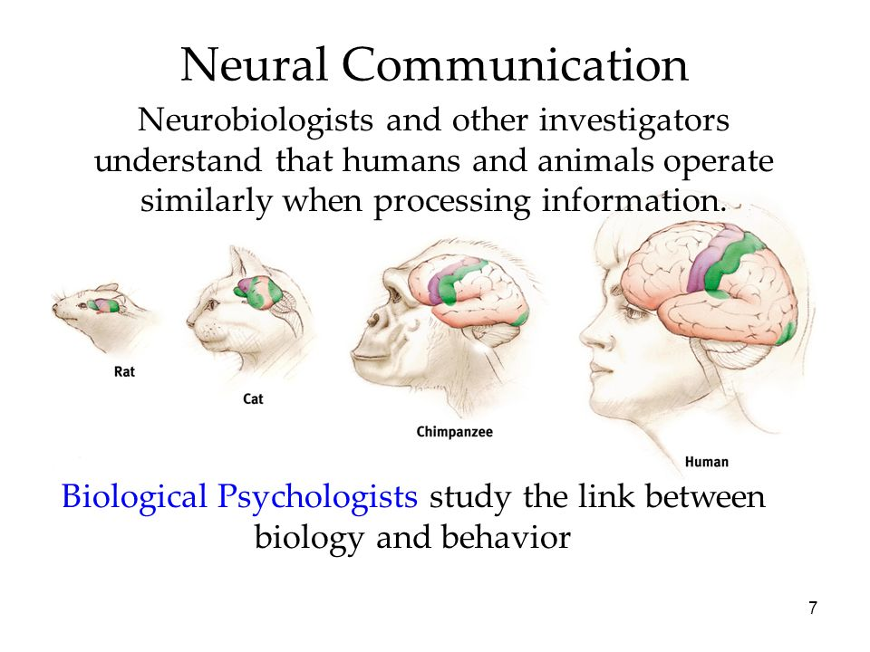 Biological Psychologists study the link between biology and behavior