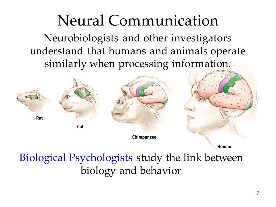 Biological Psychologists study the link between biology and behavior