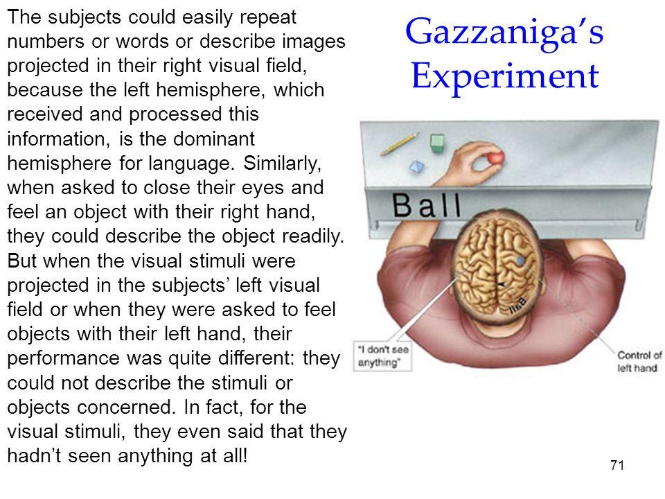 Gazzaniga's Experiment