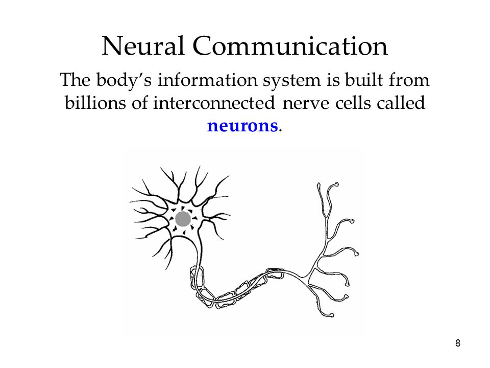 Neural Communication The body's information system is built from billions of interconnected nerve cells called neurons.