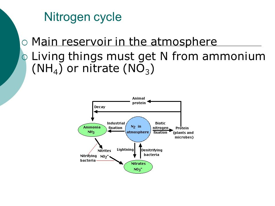 Nitrogen cycle Main reservoir in the atmosphere