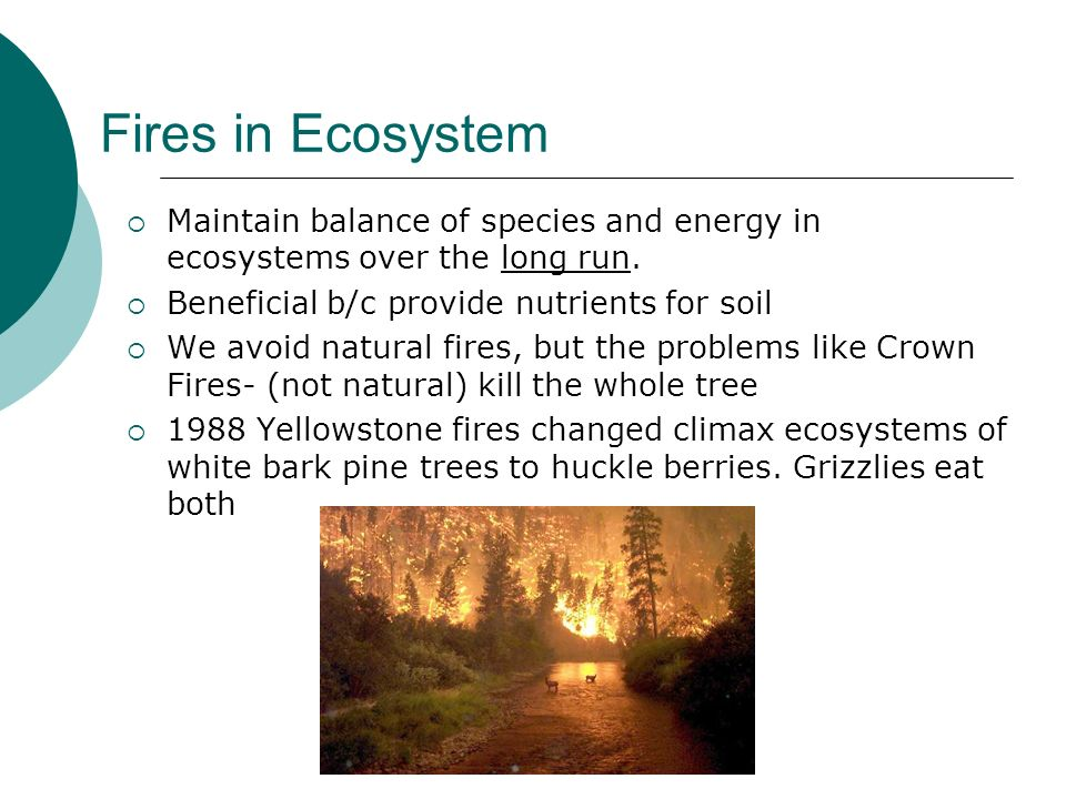 Fires in Ecosystem Maintain balance of species and energy in ecosystems over the long run. Beneficial b/c provide nutrients for soil.