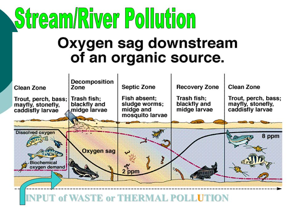 Stream/River Pollution