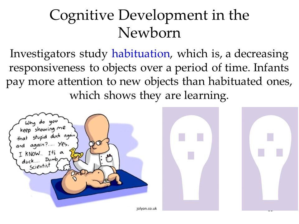 Cognitive Development in the Newborn