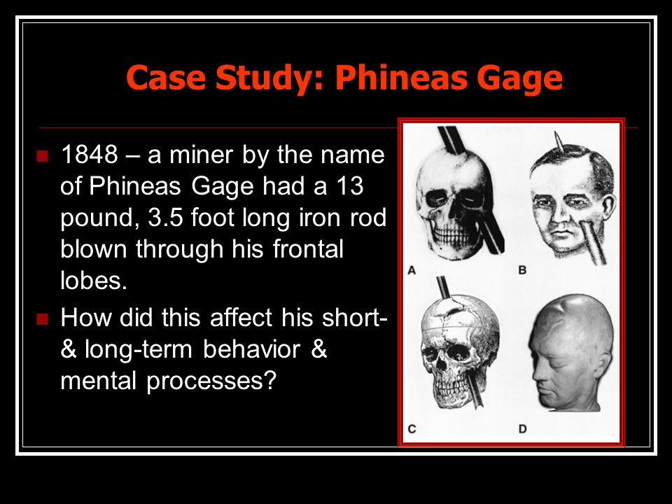 phineas gage and the role of Since, phinaes life the research has been able to uncover the many miracles on how his life changed on that fatal day which changed his life forever phineas gage the forebrain plays a significant part in cognitive functions.