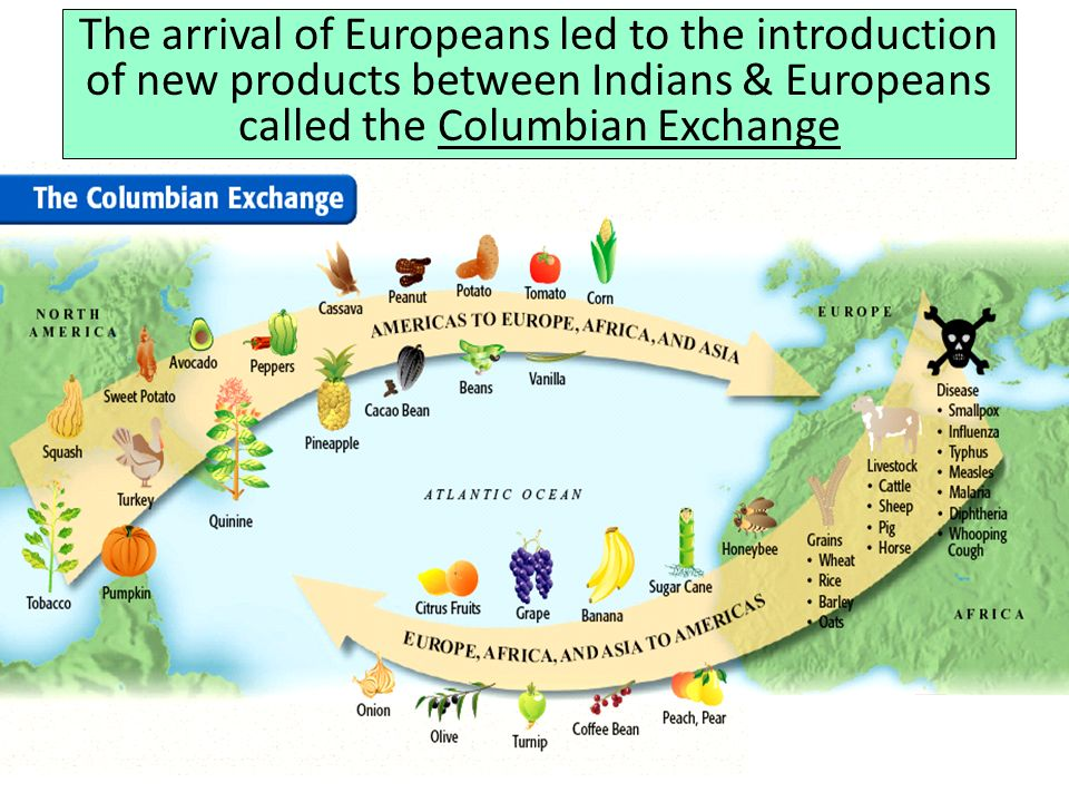 The arrival of Europeans led to the introduction of new products between Indians & Europeans called the Columbian Exchange