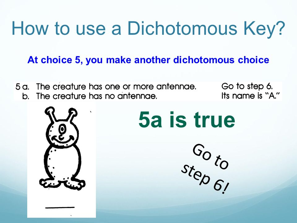 At choice 5, you make another dichotomous choice