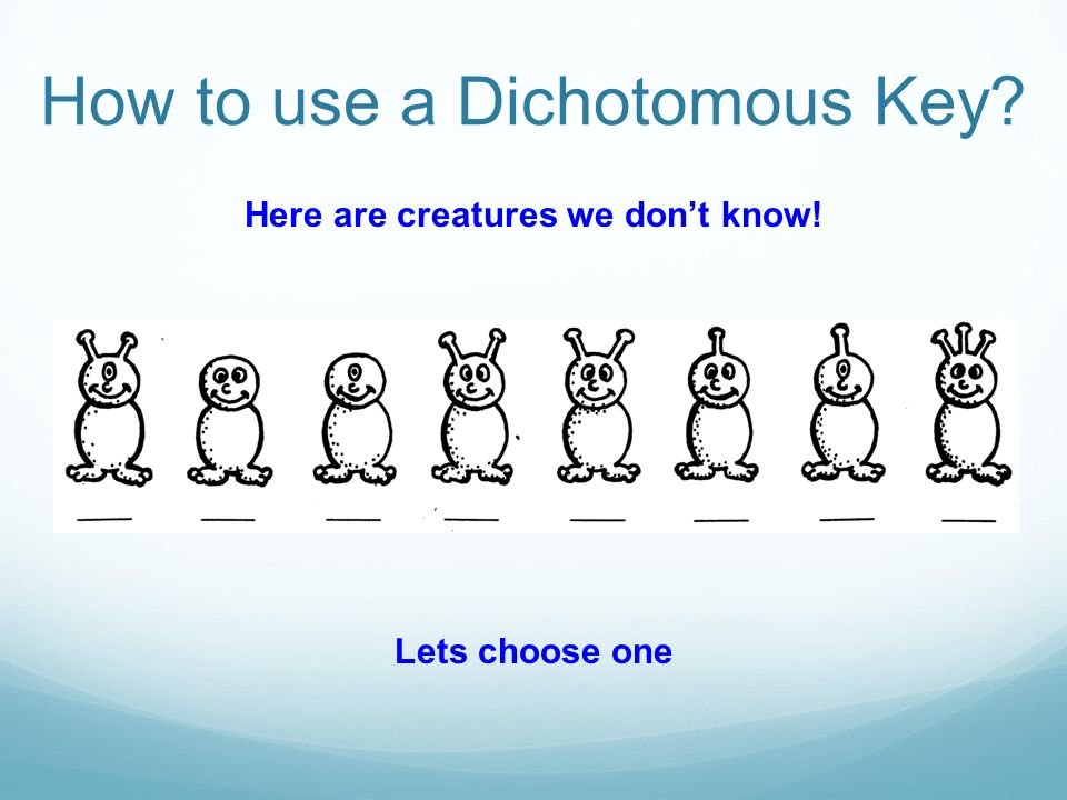 Here are creatures we don't know!