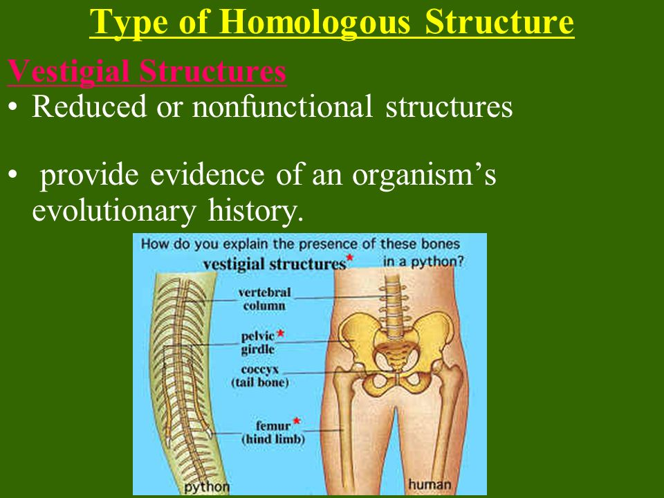 Type of Homologous Structure
