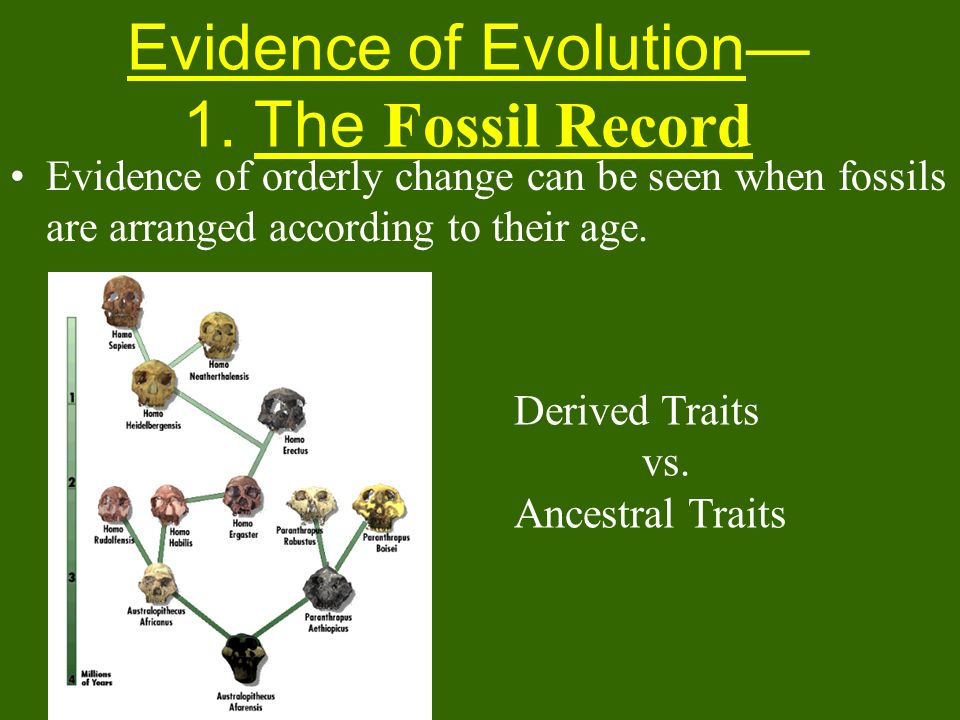 Evidence of Evolution— 1. The Fossil Record