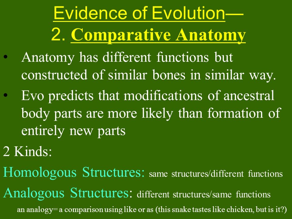 Evidence of Evolution— 2. Comparative Anatomy