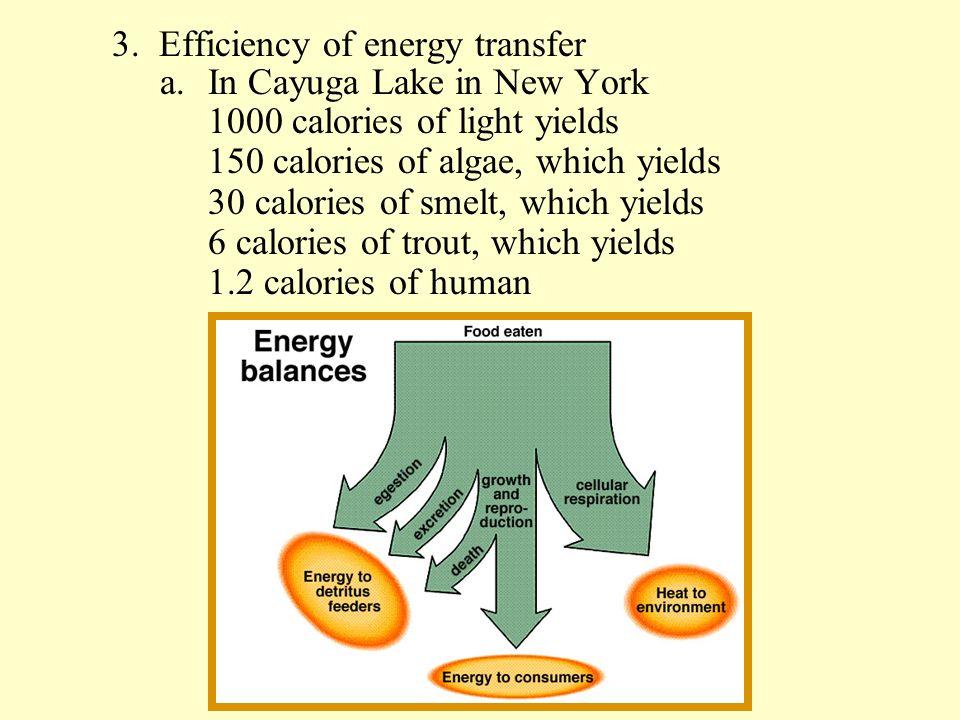 3. Efficiency of energy transfer
