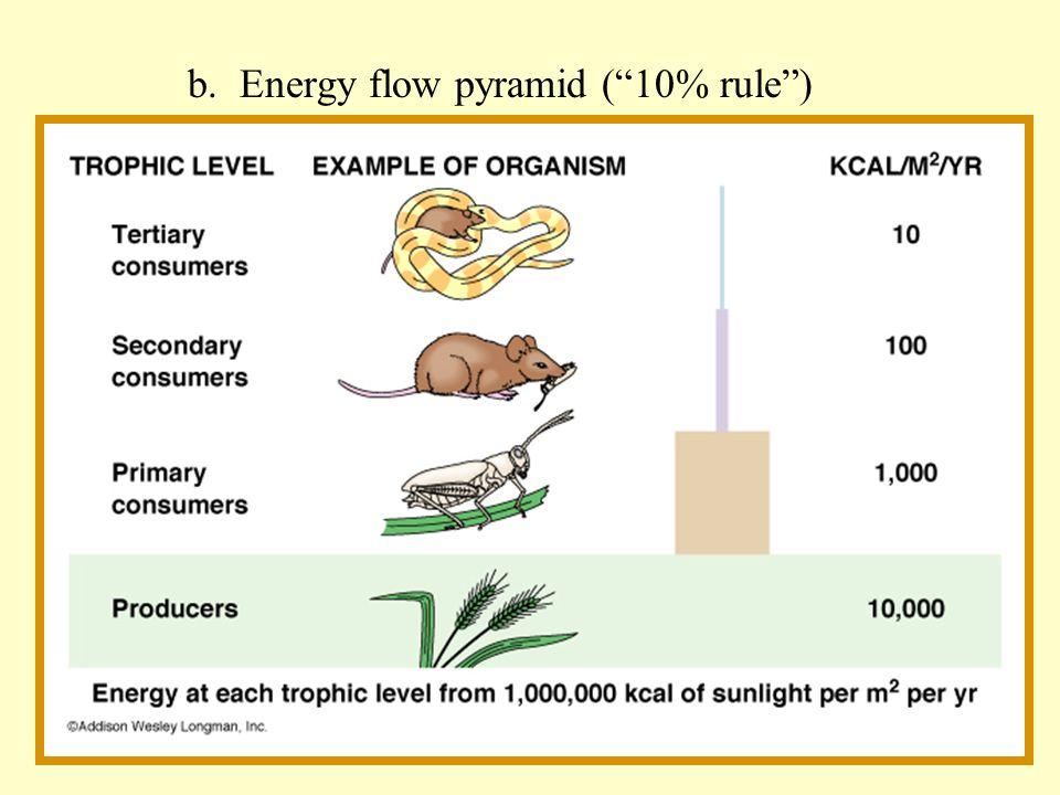 b. Energy flow pyramid ( 10% rule )