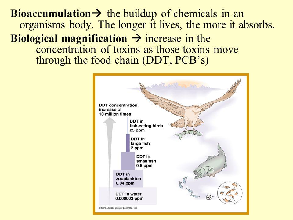 Bioaccumulation the buildup of chemicals in an organisms body
