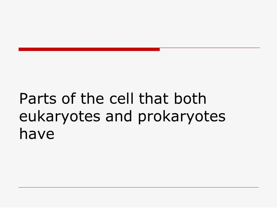Parts of the cell that both eukaryotes and prokaryotes have