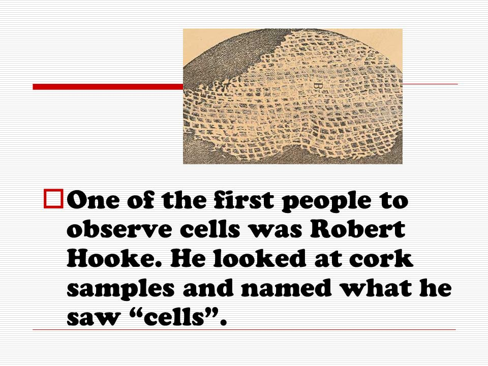 One of the first people to observe cells was Robert Hooke