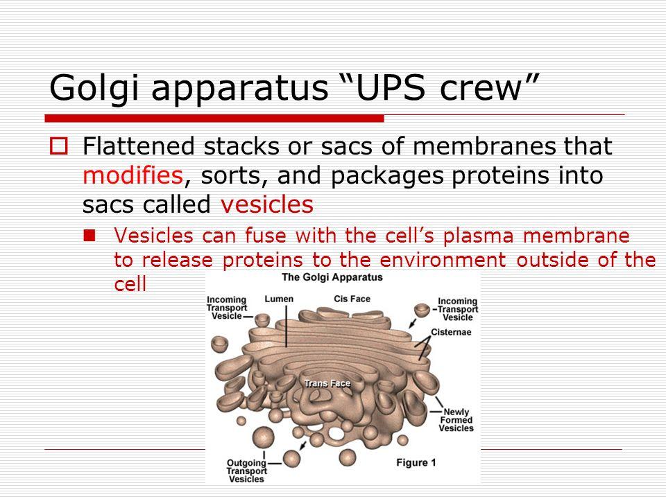 Golgi apparatus UPS crew